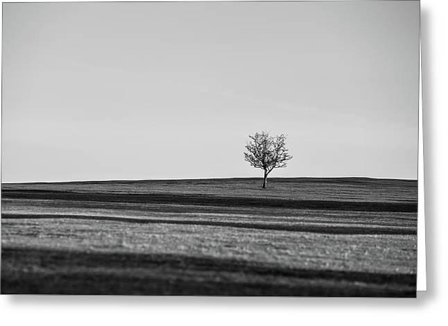 Lone Hawthorn Tree Iv Greeting Card by Helen Northcott