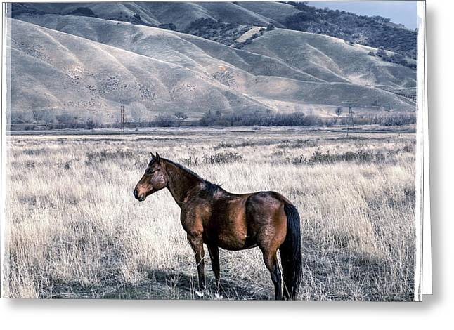Lone Horse In Pasture Greeting Card
