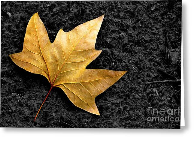 Asphalt Greeting Cards - Lone Leaf Greeting Card by Carlos Caetano
