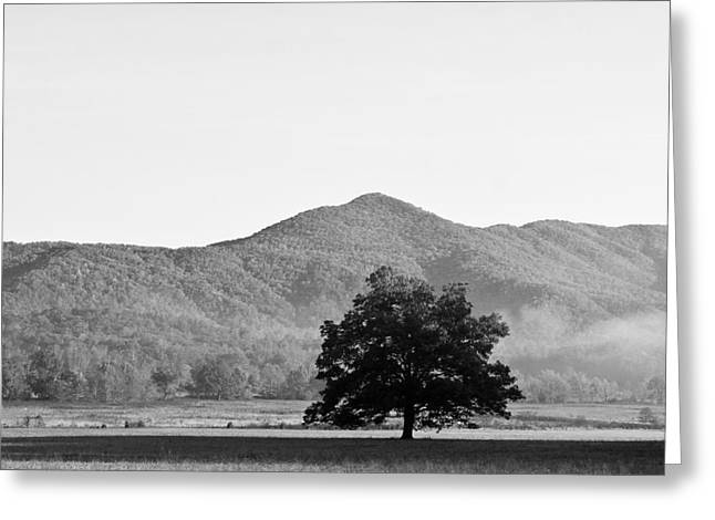 Greeting Card featuring the photograph Lone Mountain Tree by Bob Decker