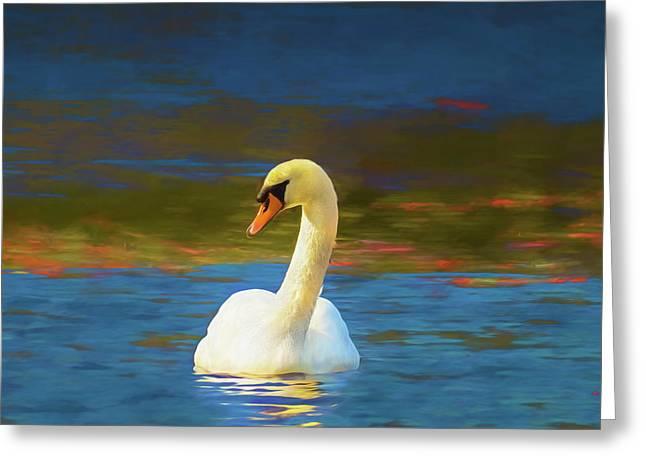 Lone Mute Swan. Greeting Card