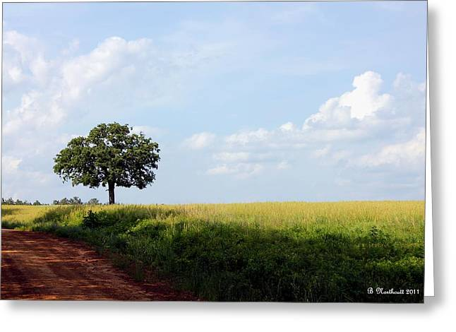 Lone Oak Greeting Card by Betty Northcutt