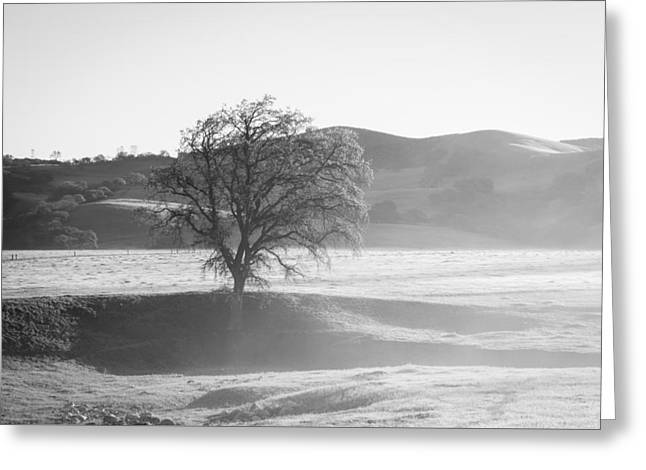 Lone Oak, Clearing Fog, San Andreas Rift Valley Greeting Card