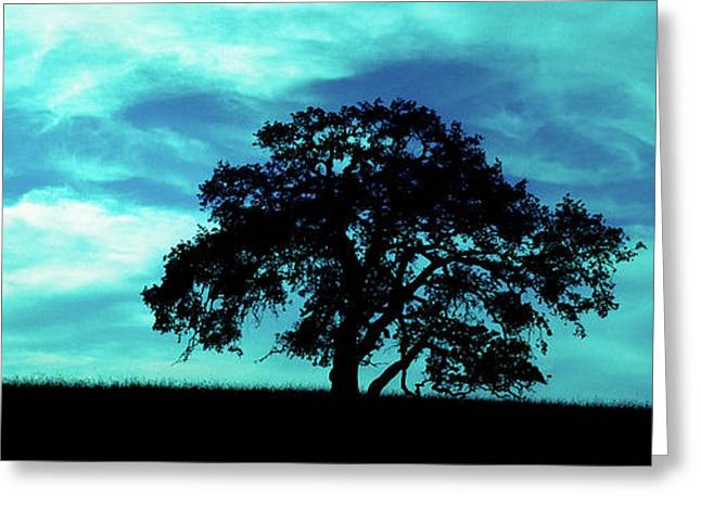 Greeting Card featuring the photograph Lone Oak by Jim and Emily Bush