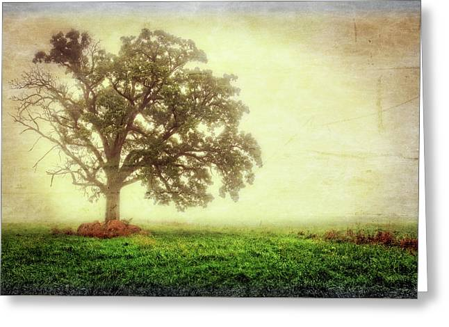 Lone Oak Tree In Fog Greeting Card by Jennifer Rondinelli Reilly - Fine Art Photography