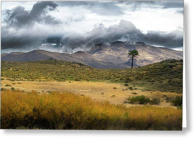 Greeting Card featuring the photograph Lone Pine High Desert Nevada by Frank Wilson