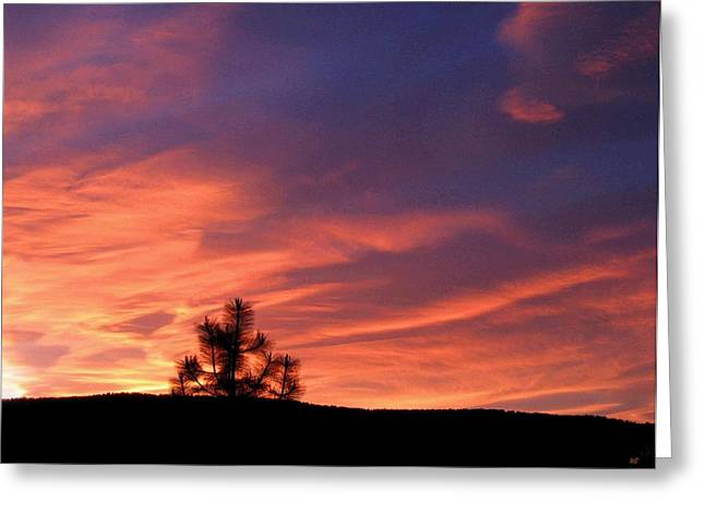 Lone Pine Sunset Greeting Card by Will Borden