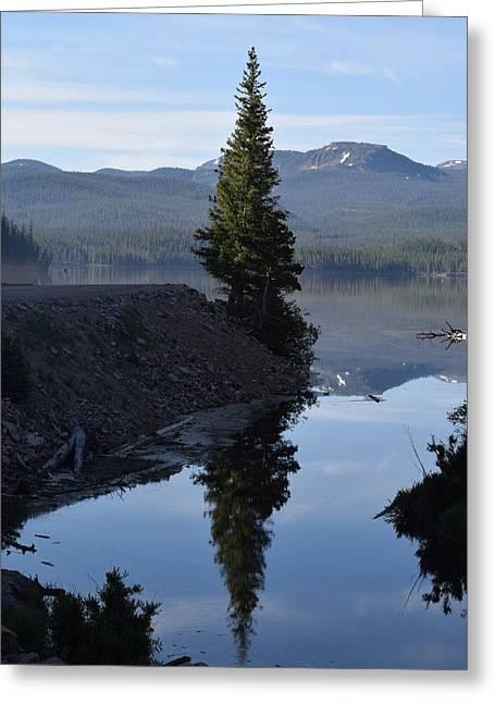 Lone Pine Reflection Chambers Lake Hwy 14 Co Greeting Card