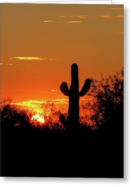 Lone Saguaro Sunrise Greeting Card