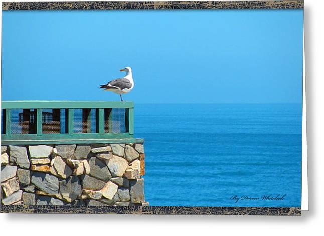Lone Sea Gull Greeting Card by Doreen Whitelock