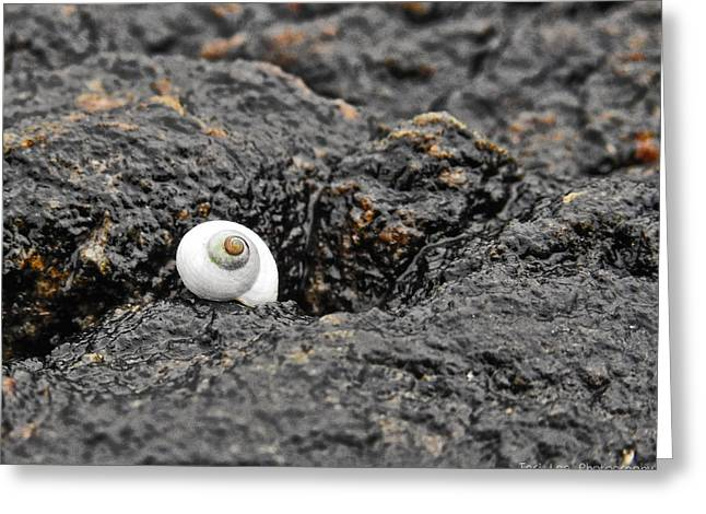 Lone Seashell Greeting Card