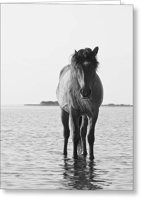 Lone Stallion Greeting Card