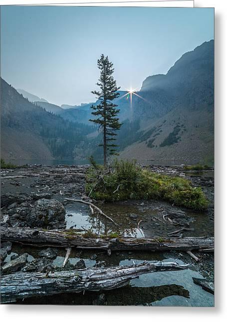 Lone Survivor // Bob Marshall Wilderness  Greeting Card