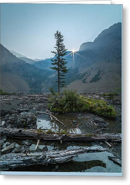 Lone Survivor // Bob Marshall Wilderness  Greeting Card