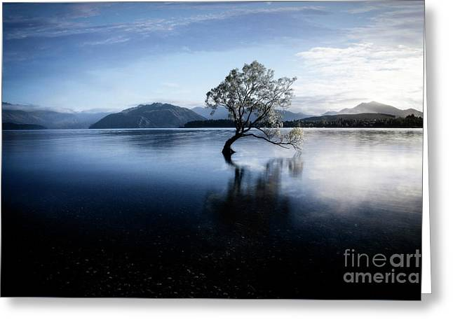 Greeting Card featuring the photograph Lone Tree 2 by Scott Kemper