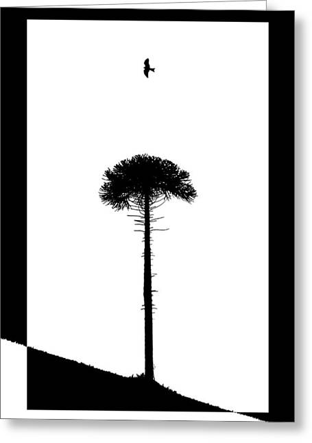 Lone Tree Greeting Card by Adam Smith
