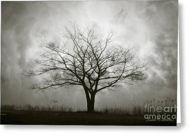 Lone Tree And Clouds Greeting Card by Dave Gordon