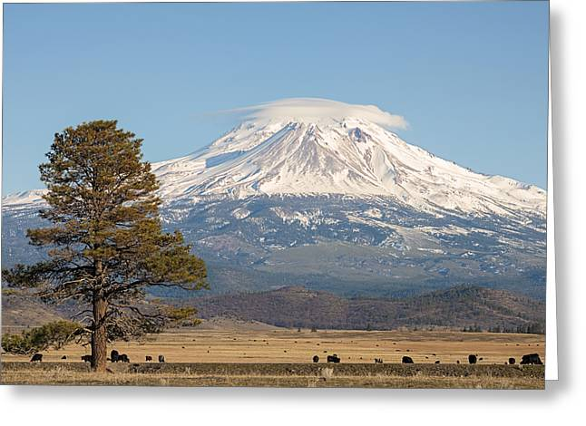 Lone Tree And Mount Shasta Greeting Card by Loree Johnson