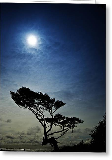 Lone Tree And Ocean Greeting Card by Dale Stillman