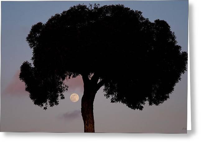 Lone Tree And Rising Moon Greeting Card by David Gordon