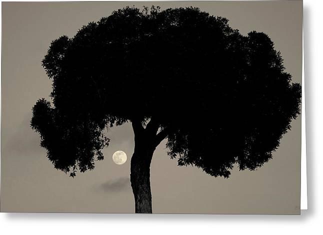 Lone Tree And Rising Moon Toned Greeting Card by David Gordon
