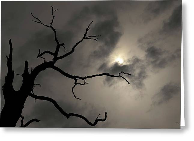 Lone Tree And Sun Toned Greeting Card by David Gordon