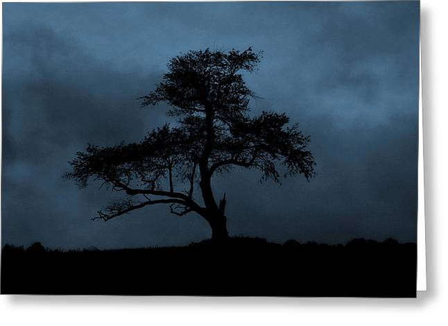 Lone Tree Blue Greeting Card by Cindy Haggerty