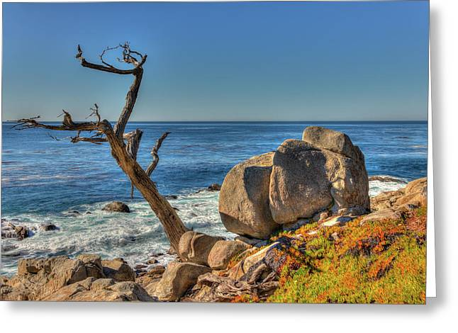 Lone Tree California Coast Greeting Card by James Hammond