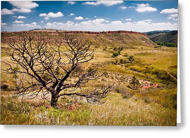 Lone Tree, Colorado Greeting Card