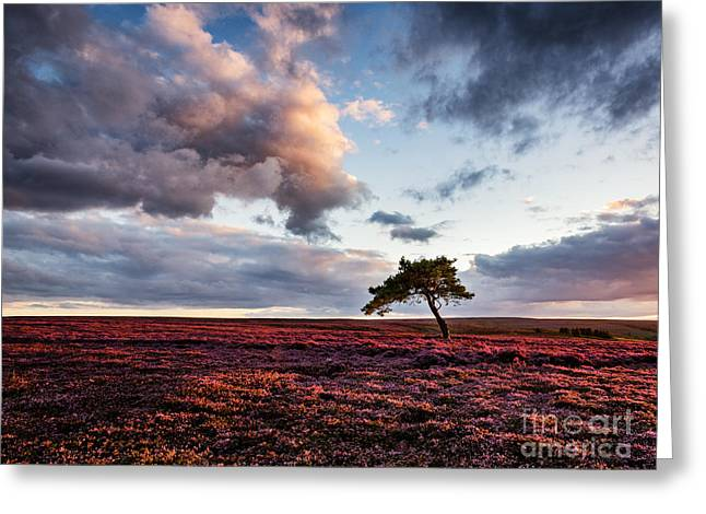 Lone Tree Egton Moor Greeting Card by Janet Burdon