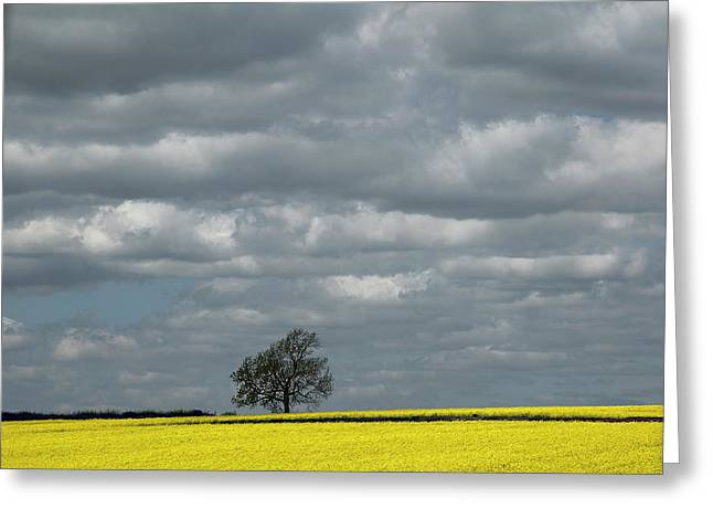 Greeting Card featuring the photograph Lone Tree by Elvira Butler