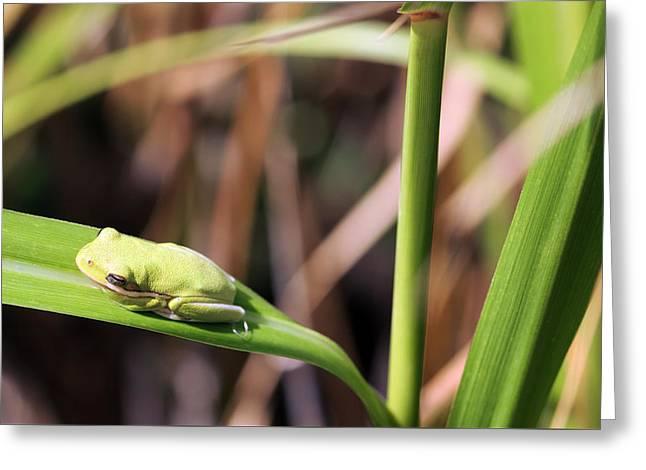 Lone Tree Frog Greeting Card