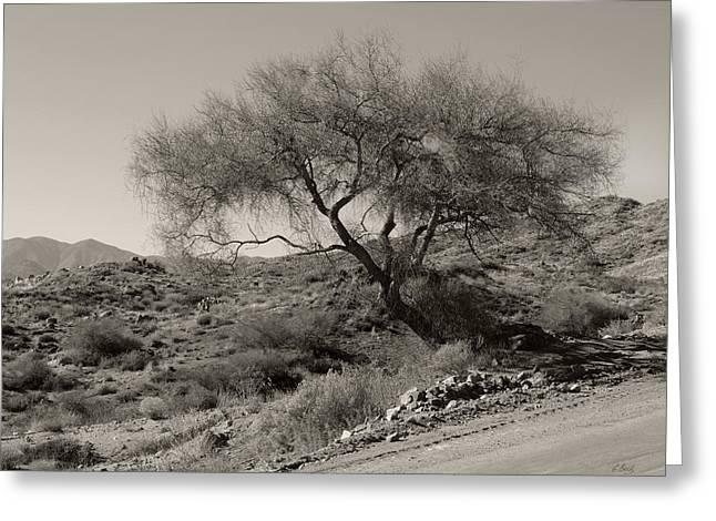 Lone Tree Greeting Card by Gordon Beck