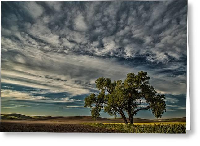 Lone Tree In Field Greeting Card