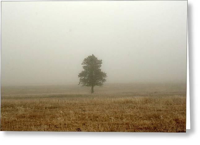 Lone Tree In Fog Greeting Card