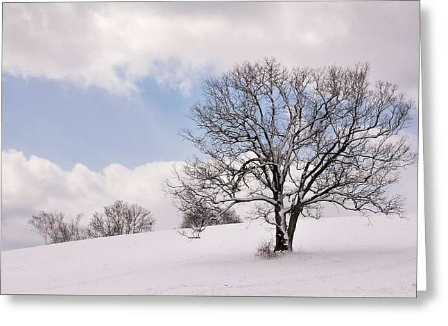 Lone Tree In Snow Greeting Card
