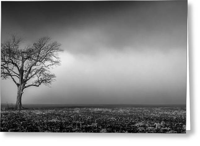 Lone Tree In The Mississippi Delta Greeting Card