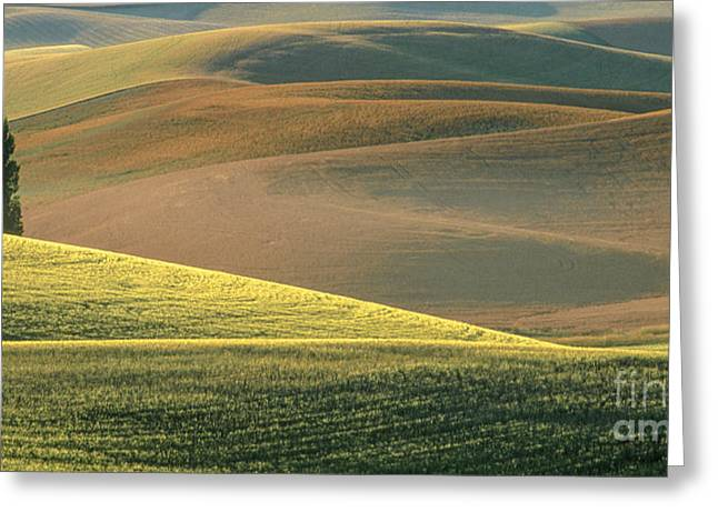 Lone Tree In The Palouse  Greeting Card