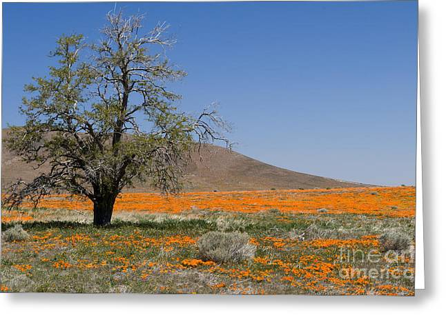 Lone Tree In The Poppies Greeting Card by Sandra Bronstein