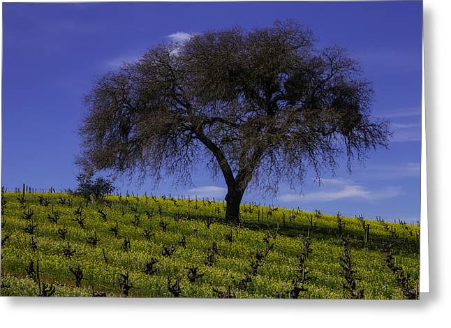 Lone Tree In Vineyard Greeting Card
