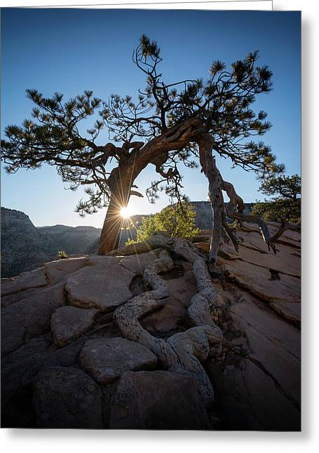 Lone Tree In Zion National Park Greeting Card by James Udall