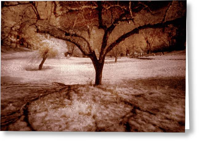 Greeting Card featuring the digital art Lone Tree by Michael Cleere