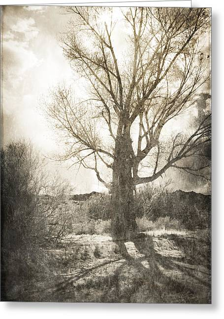 Lone Tree Greeting Card