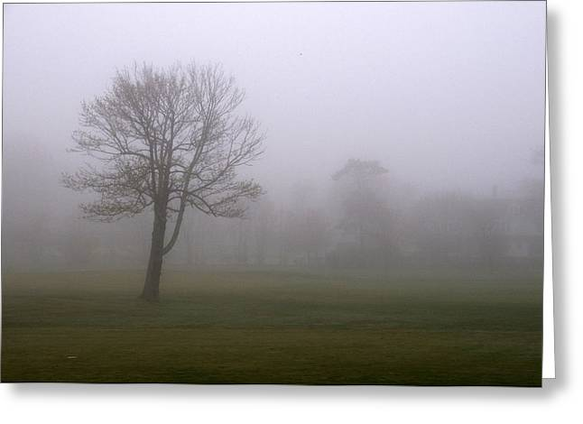 Lone Tree On A Golf Course In The Fog Greeting Card by Todd Gipstein
