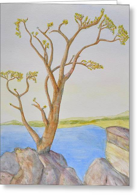 Lone Tree On The Ocean Greeting Card by Jonathan Galente