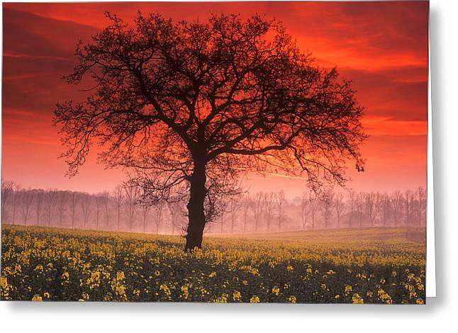Lone Tree Sunrise Greeting Card by John Perriment