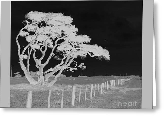 Lone Tree, West Coast Greeting Card