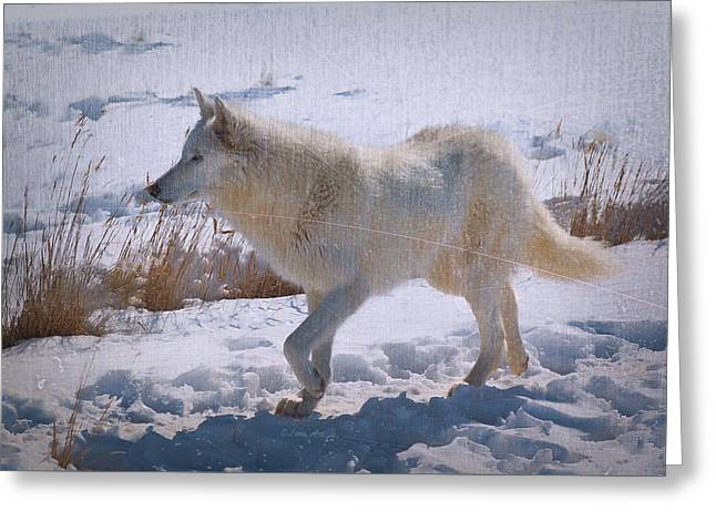 Lone White Wolf Greeting Card by Lena  Owens OLena Art