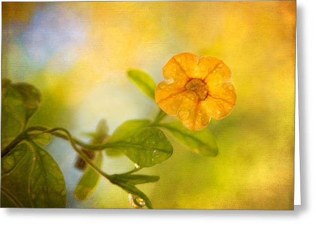 Lone Yellow Flower Greeting Card