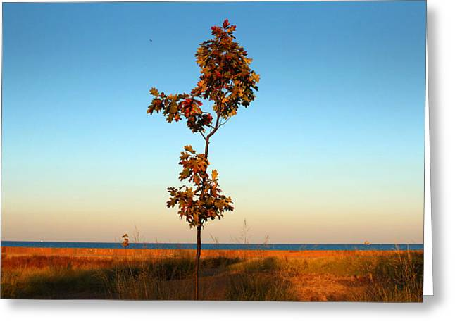 Greeting Card featuring the photograph Loneliness by Milena Ilieva